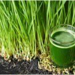 5 mejores beneficios del jugo del pasto de trigo para la Salud